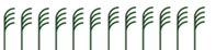 OMEX crop leaves graphic