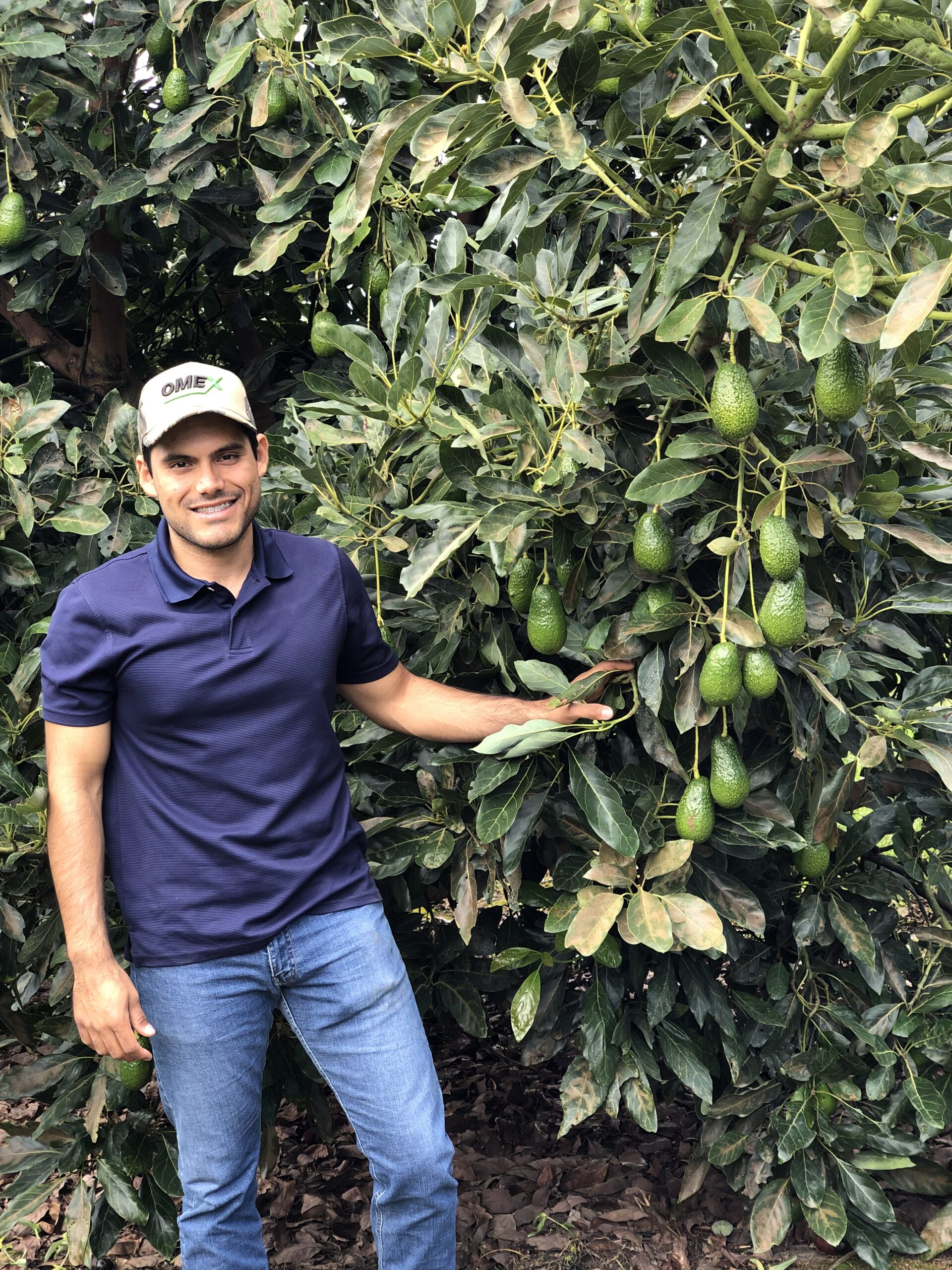 OMEX Program Achieves Awesome Avocados in Mexico