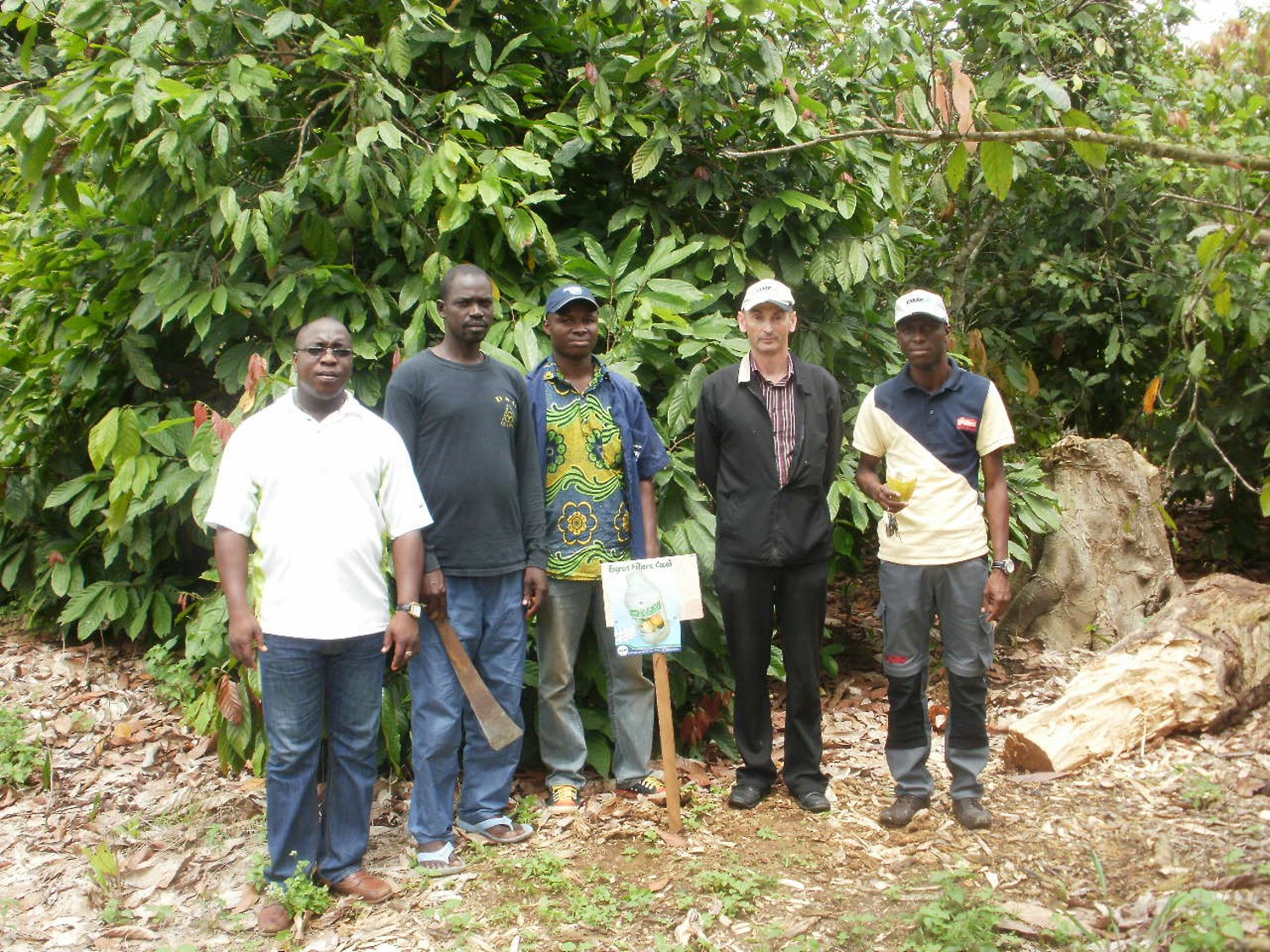Improve quality & yield of cocoa beans with Folicao